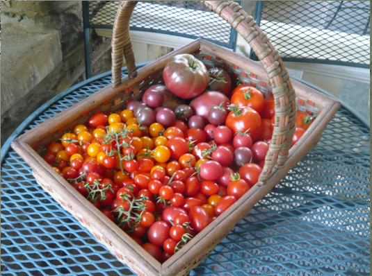 Summer's Bounty at the C. W. Henry School
