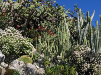 Exotic Gardens of Monte Carlo